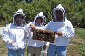 Photo of staff holding a bee colony during a site visit.