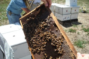Photo of bee colony