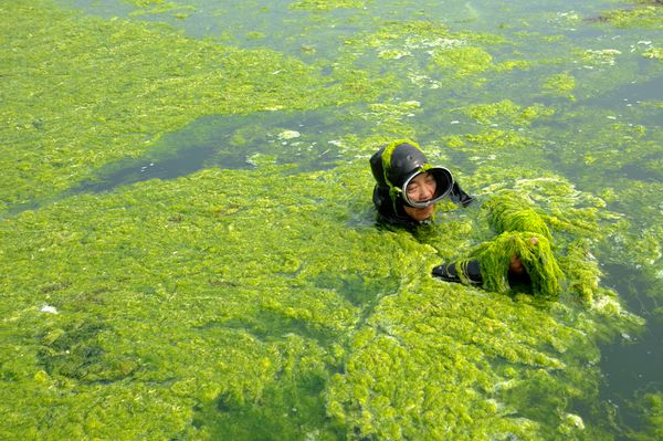 A diver wading through algae