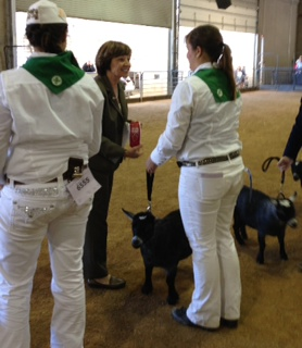 Secretary Ross congratulates winners of the pygmy goat competition at the California State Fair.