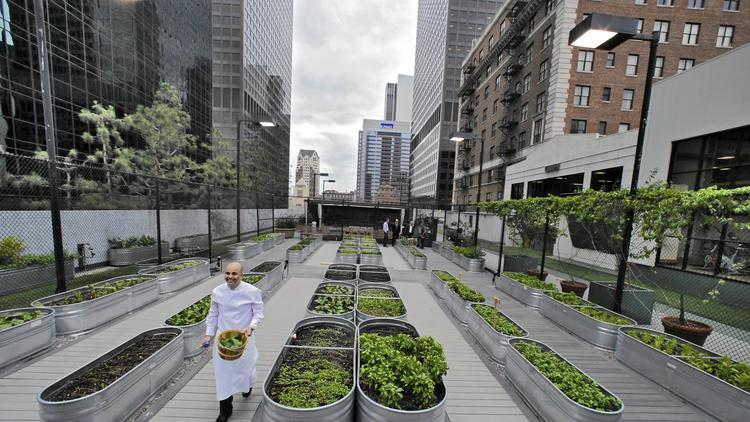 Galvanized horse troughs are used to grow a wide array of vegetables on top of the Jonathan Club. (Irfan Khan, Los Angeles Times)