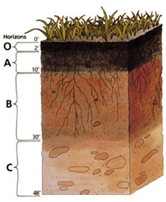 Layers in a Soil Profile (Source: USDA NRCS http://goo.gl/HS77lL)