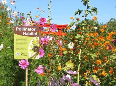 pollinator garden web 235
