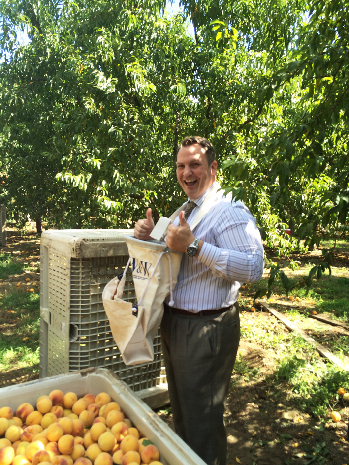 """CDFA Undersecretary Jim Houston this week at the Lomo Station peach orchard in Live Oak, in Sutter County. California is the largest peach producing state in the country, and Sutter County alone, with  production of more than 184,000 tons at a value of nearly $70 million, out-produces the second and third ranking states, South Carolina and Georgia. So it really is time to start talking about """"the Sutter peach."""""""