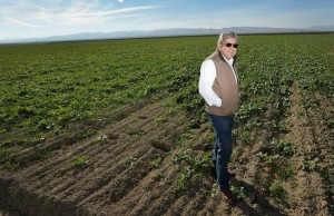 Sano Farms field manager Jesse Sanchez, 63, of Fresno, stands in a field filled with ground cover on Nov. 18 in Firebaugh. He recently won recognition from the White House for his contributions to the farming operation, including new soil and tilling techniques. The ground cover will be tilled into the soil which will enrich the soil with organic material to help the crop that will be planted in the spring. Silvia Flores, Fresno Bee.