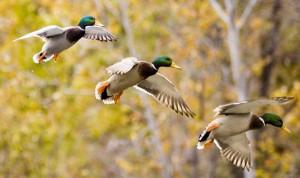 Land in the Conservation Reserve Program is important wildlife habitat.