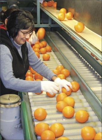 Citrus harvest underway in Tulare County. Courtesy of the California Farm Bureau Federation