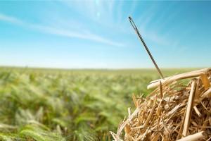 Needle in a Haystack Searching Haystack Needle Hay Ideas Concepts