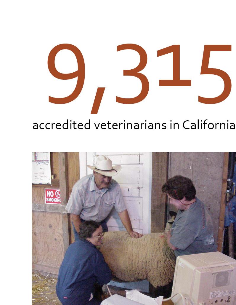 Veterinarian blog statistic block