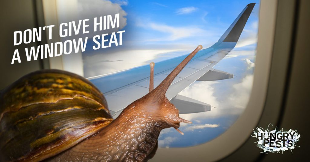 Hungry Pests - Dont' give him a window seat!