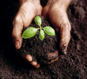 Hands cradling a small plant in dirt
