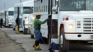 Farm workers boarding buses in Monterey County