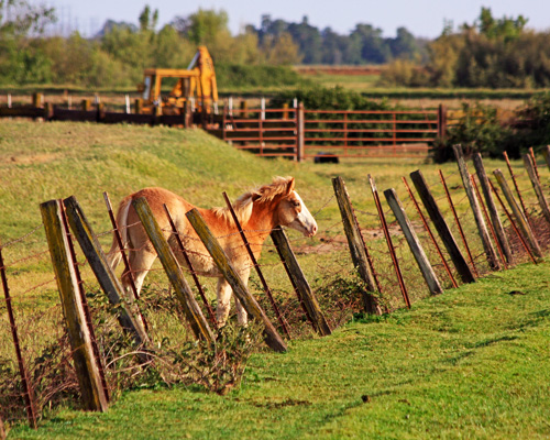A horse by a fence in a field
