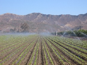 A field being watered