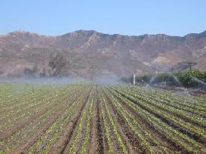 A California farm field.
