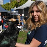 4-H and FFA members showed chickens, rabbits, pigs and other project animals