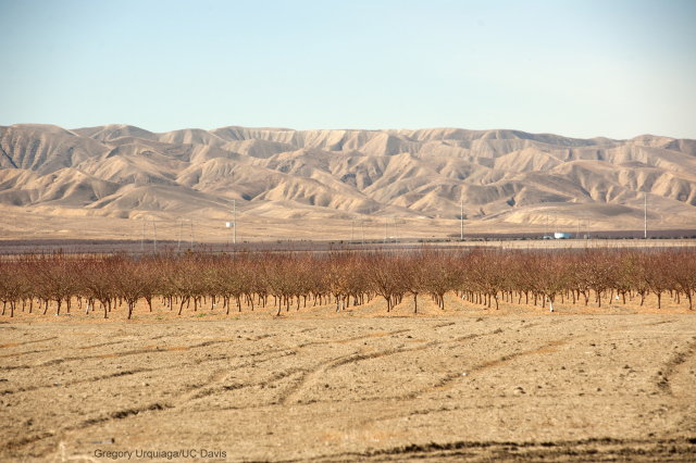 Dry fields and bare trees stand at Panoche Road, looking west, on Wednesday February 5, 2014, near San Joaquin, CA.