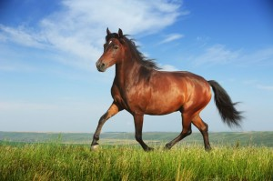 A galloping horse