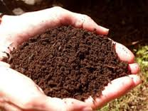 Soil held in the palm of a hand