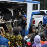 Students enjoying a cow presentation