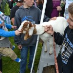 A baby pets a goat on Ag Day