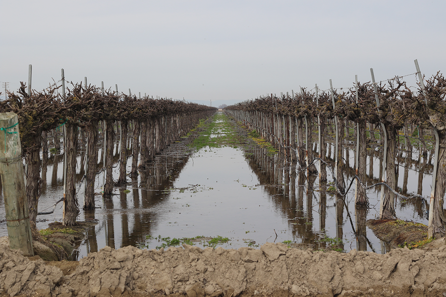 Flooding farmland to recharge groundwater