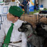 Pygmy goats on Ag Day