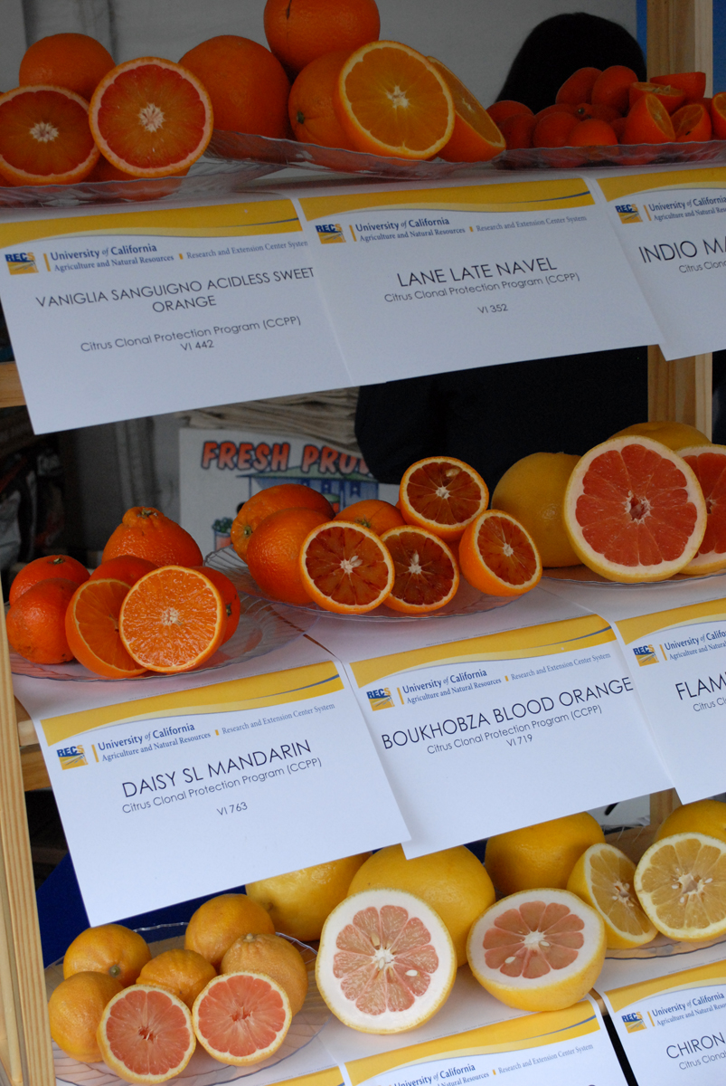 Display of citrus fruits