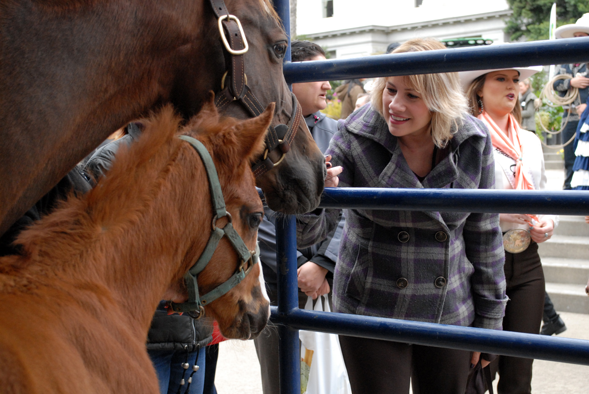 Ag Day attendee petting a horse