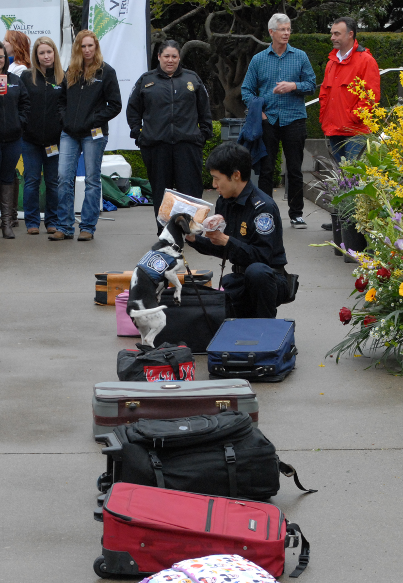 Danny Lee with US Customs and Border Protection demonstrating the Beagle Brigade