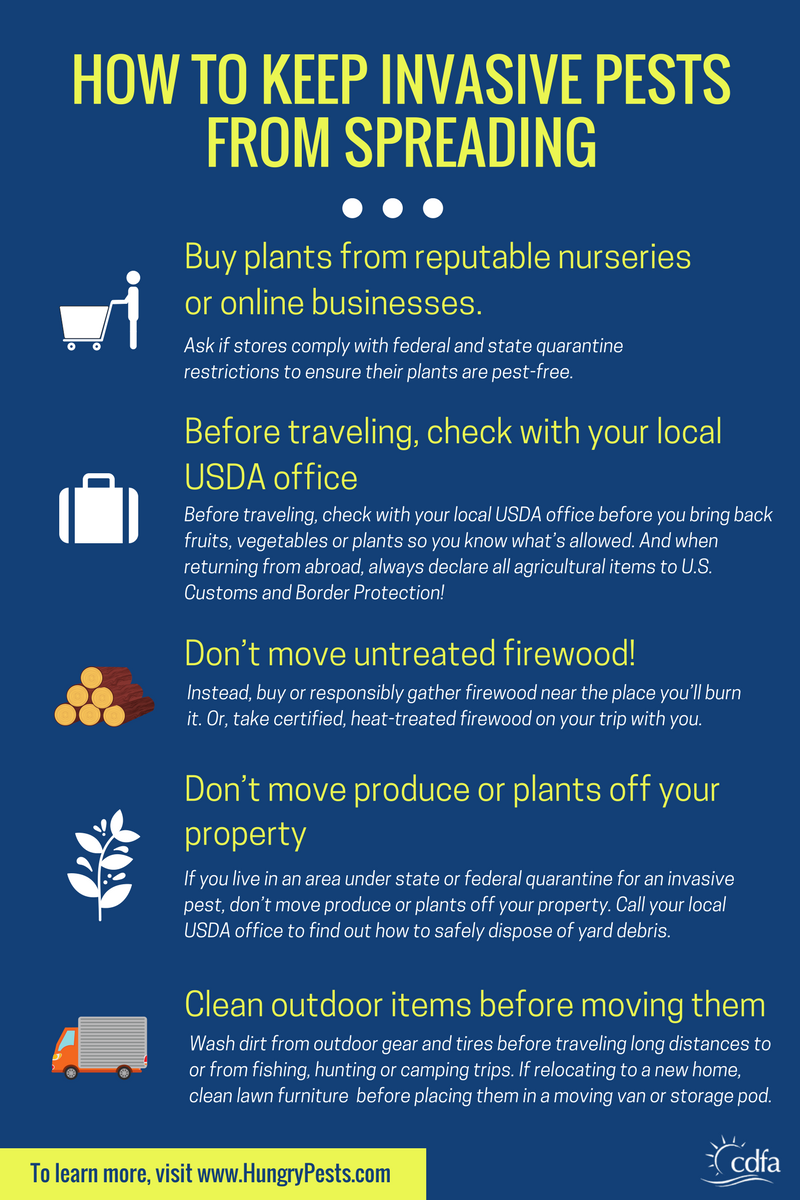 How to Keep Invasive Pests from Spreading