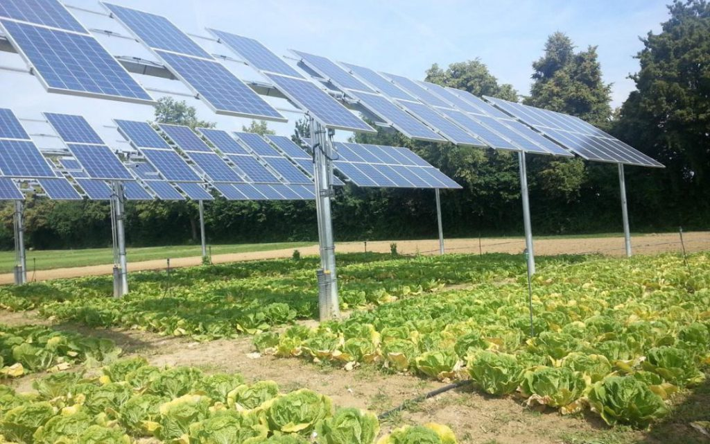 Solar panels on a California farm
