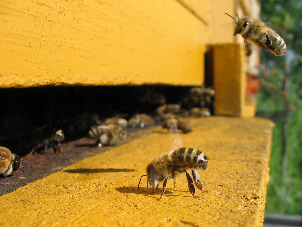 Bees at an entrance to a hive.